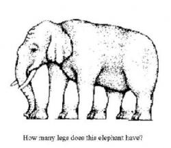Funny photos - How many legs