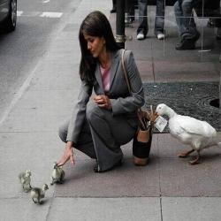 Funny photos - Cheating ducks