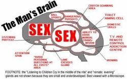 Funny photos - The brain of the man