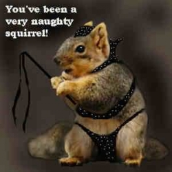Animal photos - Naughty squirrel