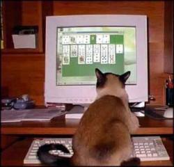 Animal photos - Gambler
