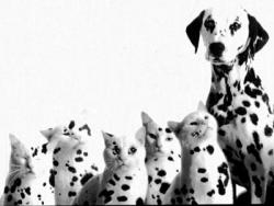 Animal photos - Dog