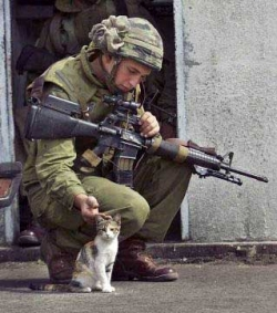 War photos - Little cat