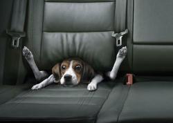 Animal photos - Stuck in car