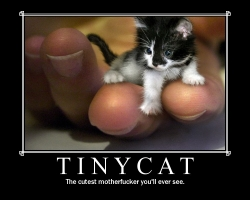 Animal photos - Tiny cat