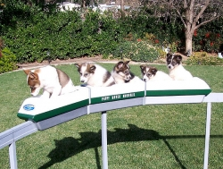 Funny photos - Puppy mover monorail