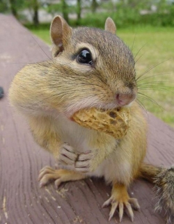 Animal photos - Sorry, i am really hungry