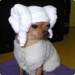 Animal photos - I has just having a bath