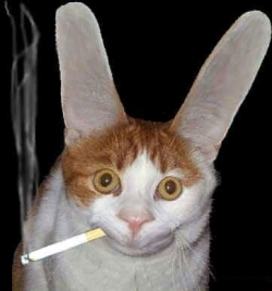 Animal photos - Cat smokes