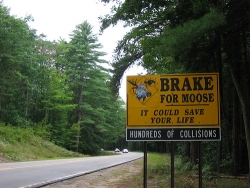 Funny photos - Brake for moose