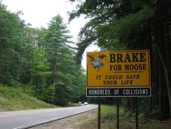 Funny photos - Brake for moose