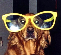 Animal photos - Dog's glasses