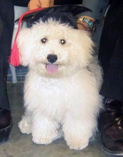 Animal photos - Graduate