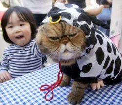 Animal photos - Cat in a cow suit
