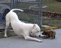 Animal photos - Have fight in one at