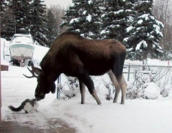 Animal photos - Moose and squirrel