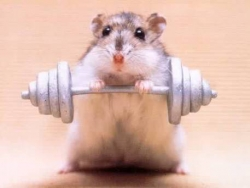 Animal photos - Strong mouse