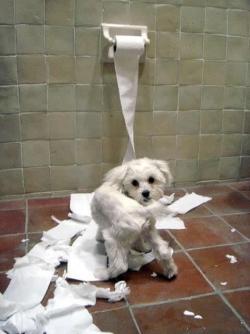 Animal photos - Bad puppy