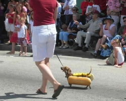 Funny photos - Hotdog suit