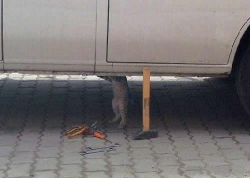Animal photos - Mechanic