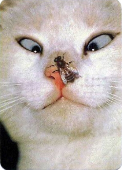 Animal photos - Cat and fly