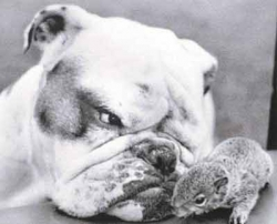 Animal photos - Dog and squirrel