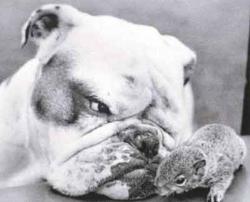 Animal photos - Dog and squirrel