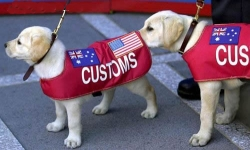 Animal photos - Customs