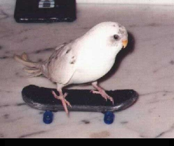 Animal photos - Skating bird