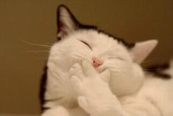 Animal photos - Cutest pussy cat
