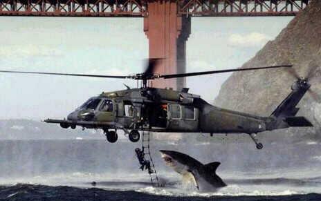 Recue shark?