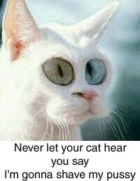 Funny photos - Cat warning