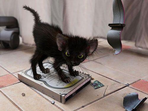 The super mini cat