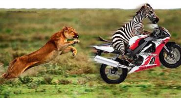 The evolution of animals