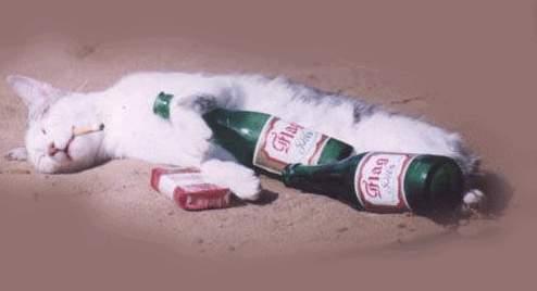 Love-sick cat