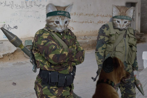 US super cats army