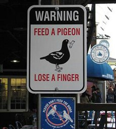 Funny photos - Feed a pigeon