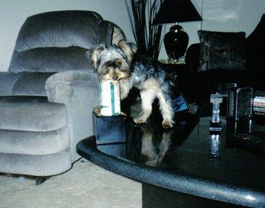 Dog guzzles beer
