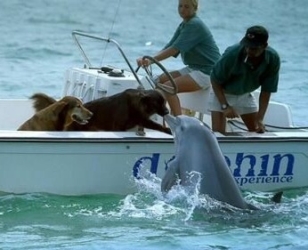 Dolphin kisses dog