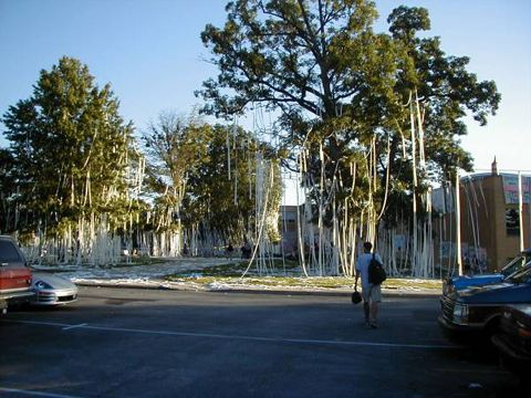 The toilet paper forest