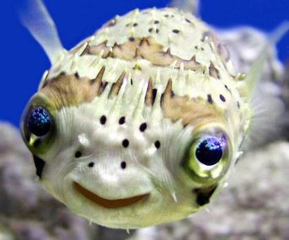 Friendly fish