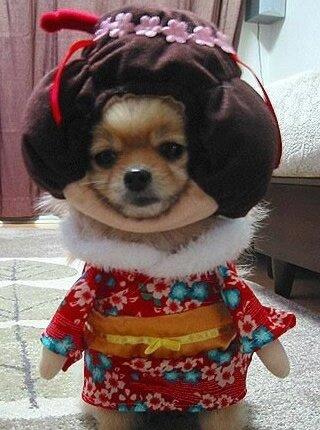 Geisha dog