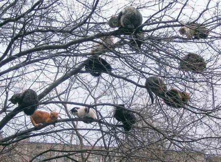 """ Cat tree"""