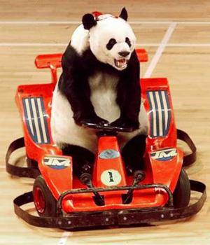 Racing panda