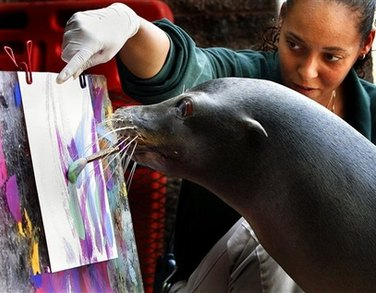 The sea lion artist
