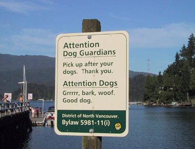 Attention dog