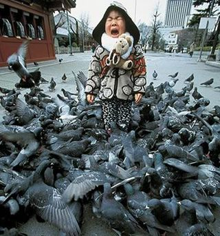 Birds bully kid
