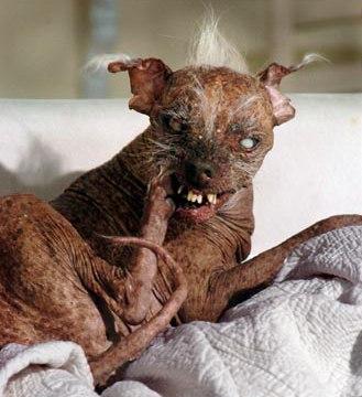 The ugliest dog