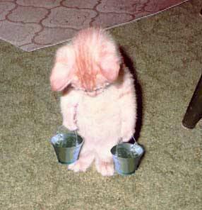 Slave kitten