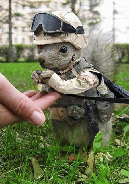 Squirrel's medal